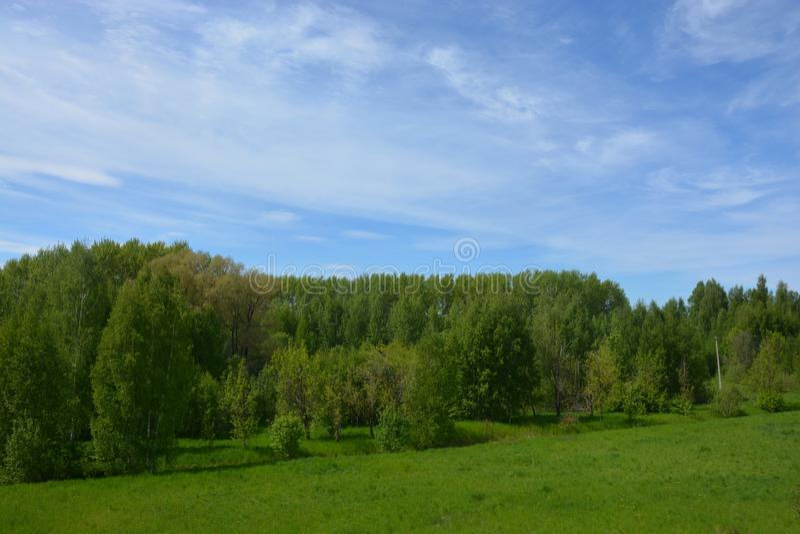Nature et arbres gentils près de Rybinsk images libres de droits