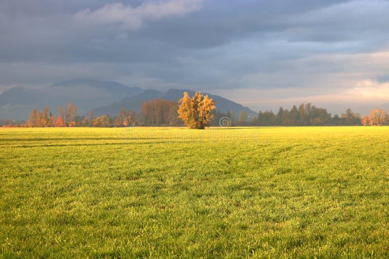 Nature et Autumn Morning Sunlight photos libres de droits