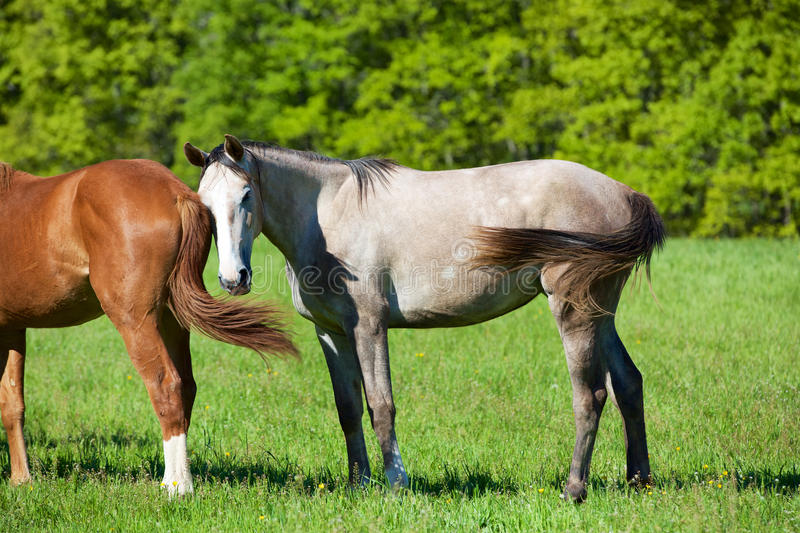 Nature et cheval image stock