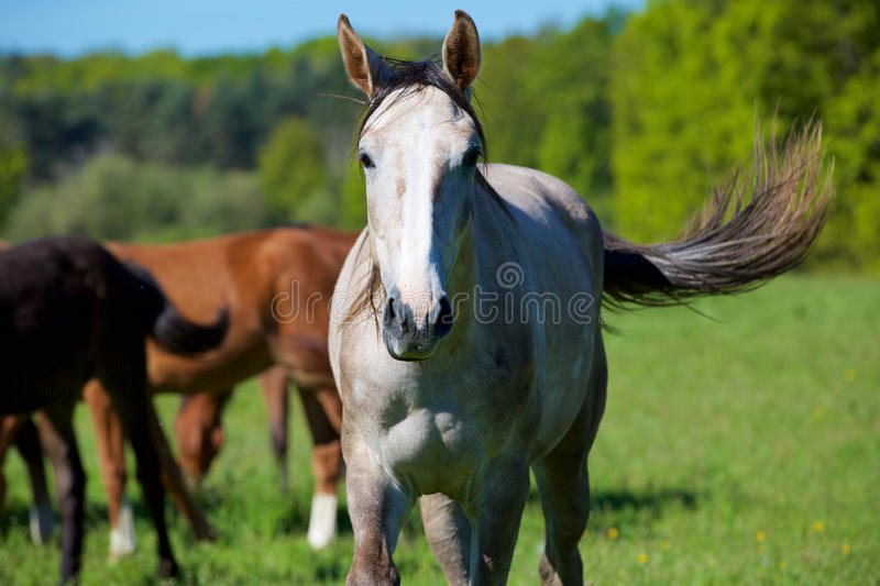 Nature et cheval images stock