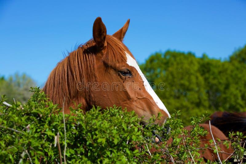 Nature et cheval photographie stock libre de droits