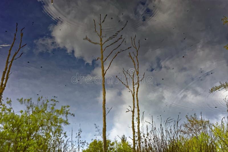 Nature et ciel reflétés sur la surface de l'eau photo stock