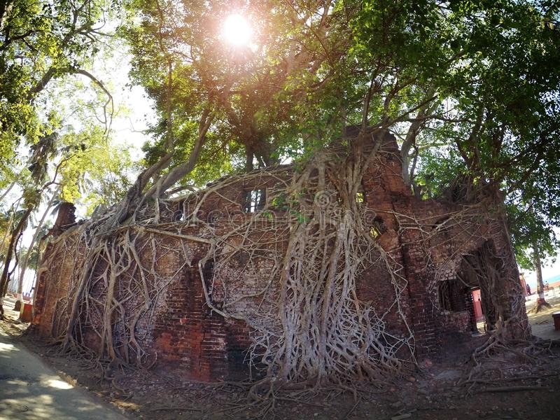 Nature expanding on old manmade structure stock images