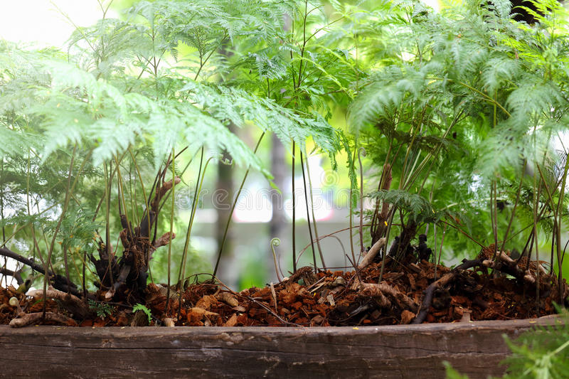 Download Nature of Ferns in garden stock image. Image of forest - 36609229