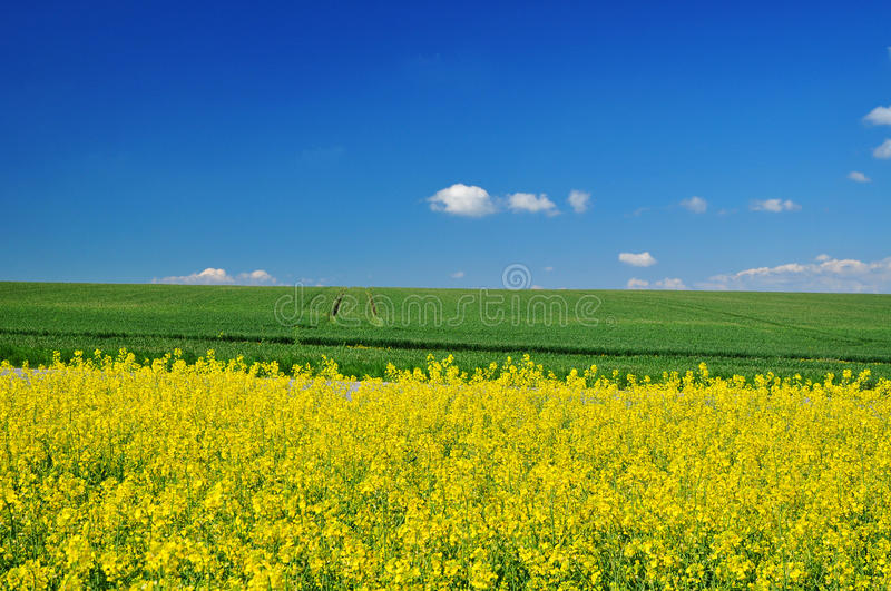Nature fields royalty free stock images