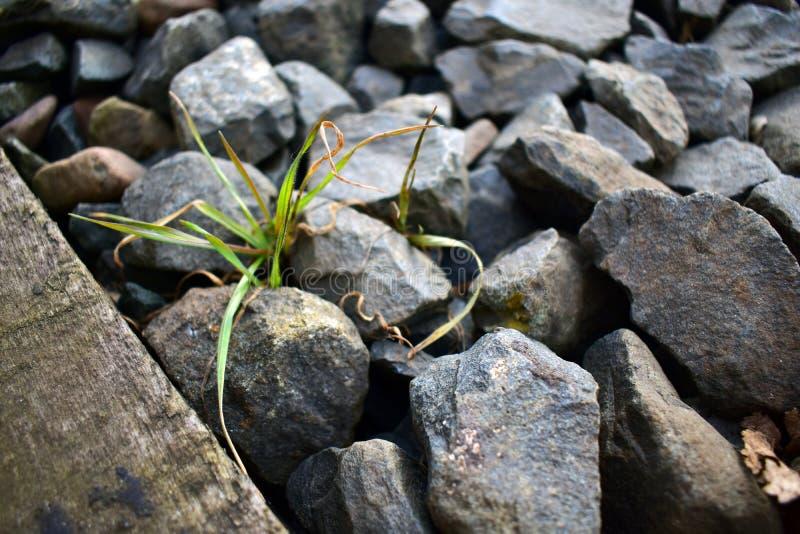 Grass und Steine stock photos