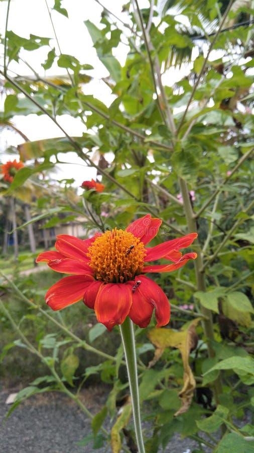 Nature& x27; flores y hormigas de la belleza de s imagen de archivo libre de regalías