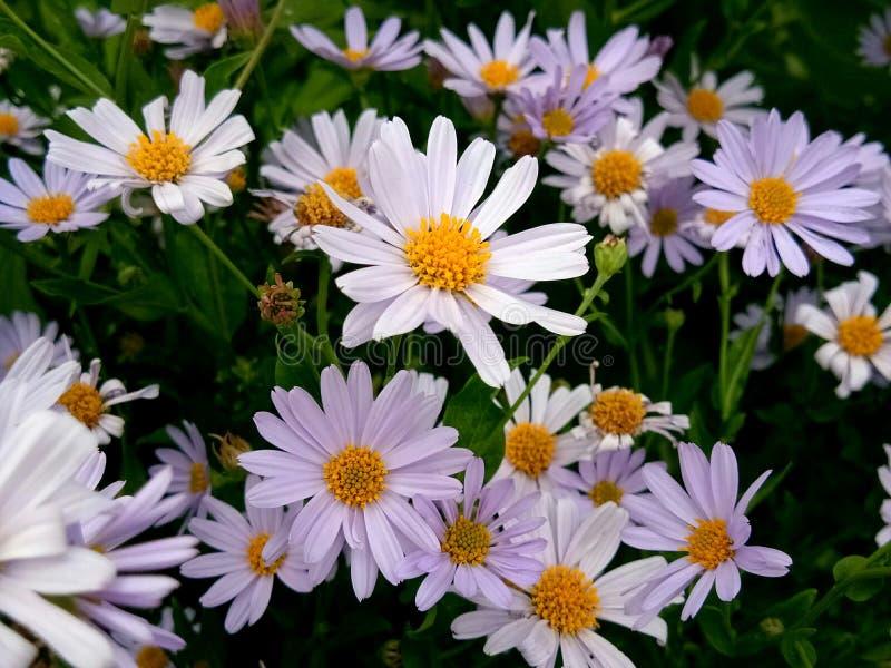 Nature flower fragility petal stock photography