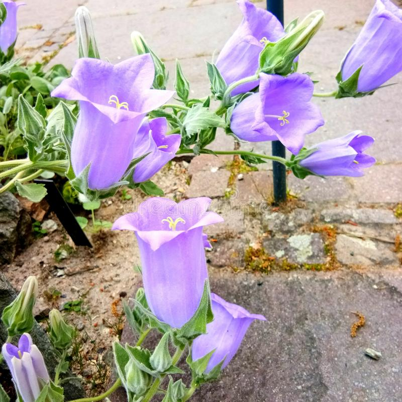 Nature flower fragility petal royalty free stock photography