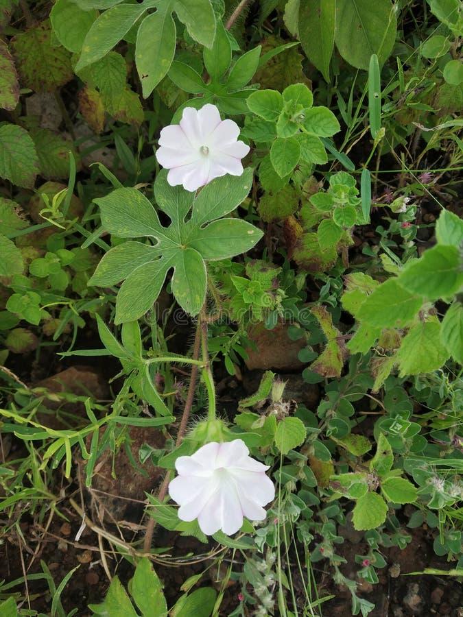 Nature. Flower, liltile, litile, white, whiteflower royalty free stock photo