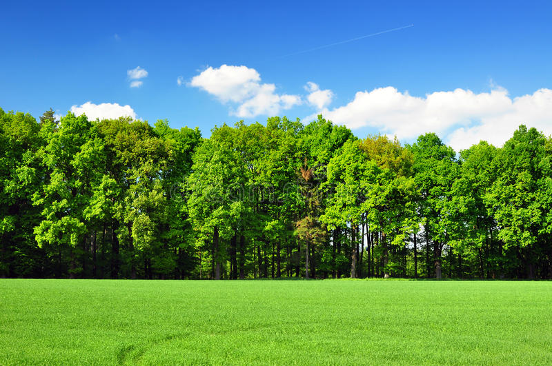 Nature forest stock photography