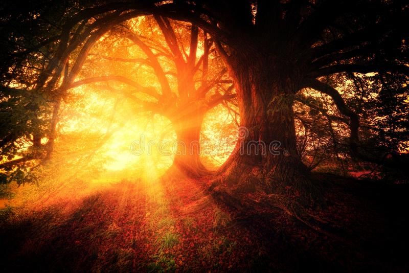 Nature, Forest, Light, Fire stock image