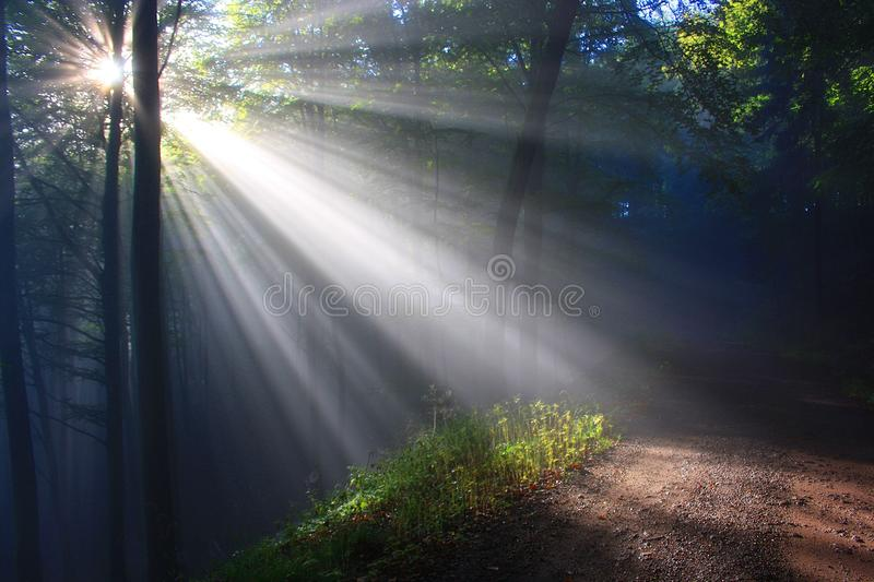 Nature, Forest, Sunlight, Woodland royalty free stock images
