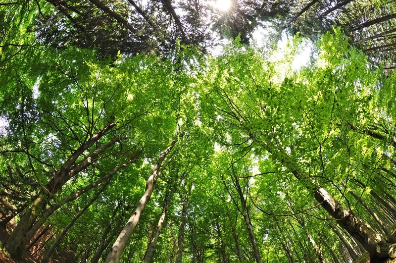 Nature forest trees fisheye view stock photo