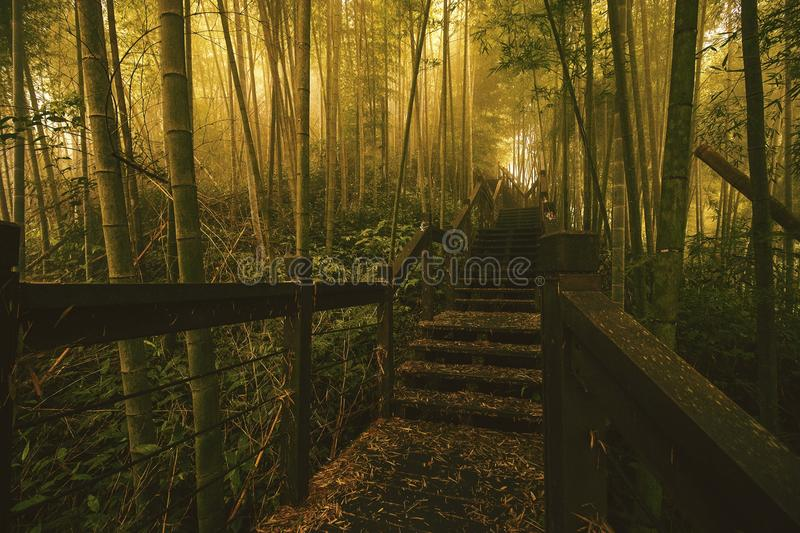 Nature, Forest, Woodland, Path stock image