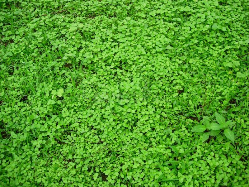 Download Nature Fresh stock photo. Image of contours, brilliant - 962794