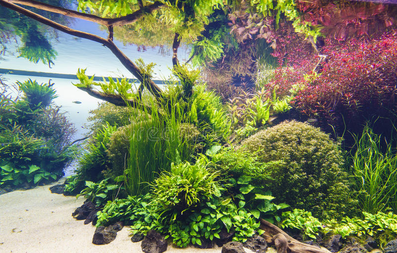 Planted aquarium stock photography
