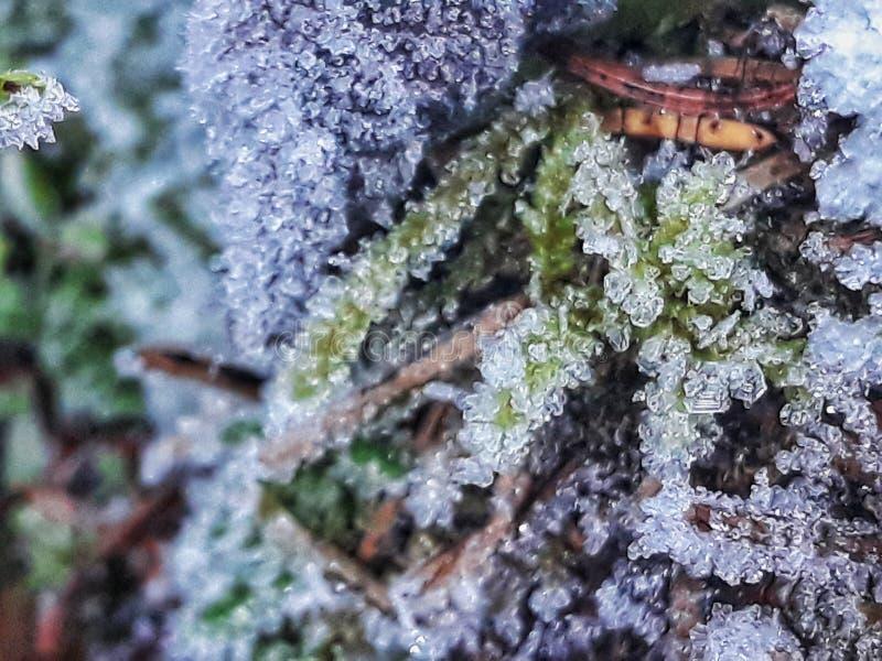 Nature gelée images libres de droits