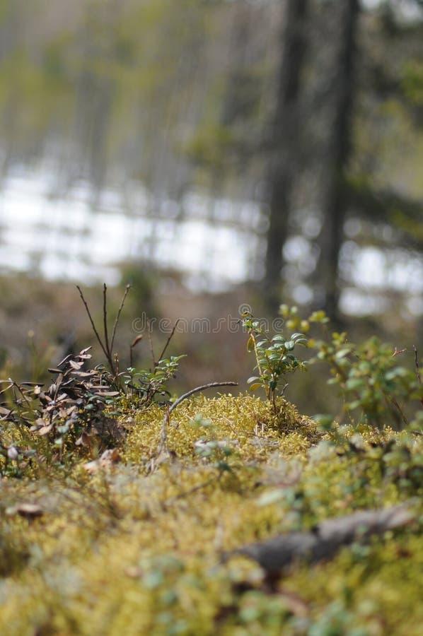 Nature. Grass in autumn stock photo