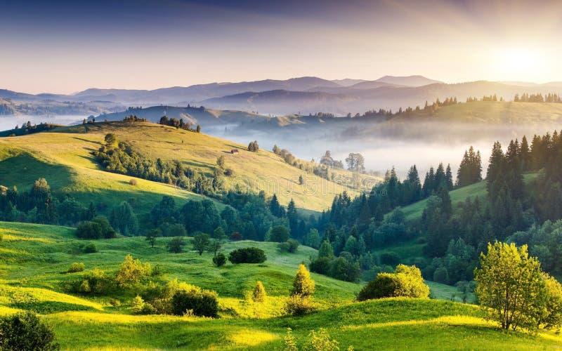 Nature, Grassland, Highland, Wilderness