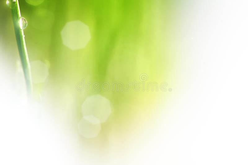 Nature Green Background Stock Images