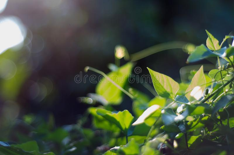 Nature green bokeh sunlight blur leaves background. royalty free stock photography