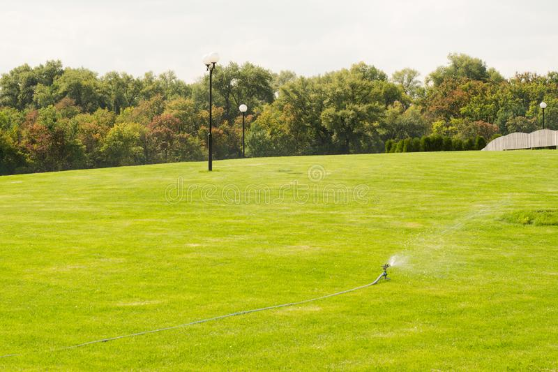 In the nature a green grass watering a lawn splashing water stock image