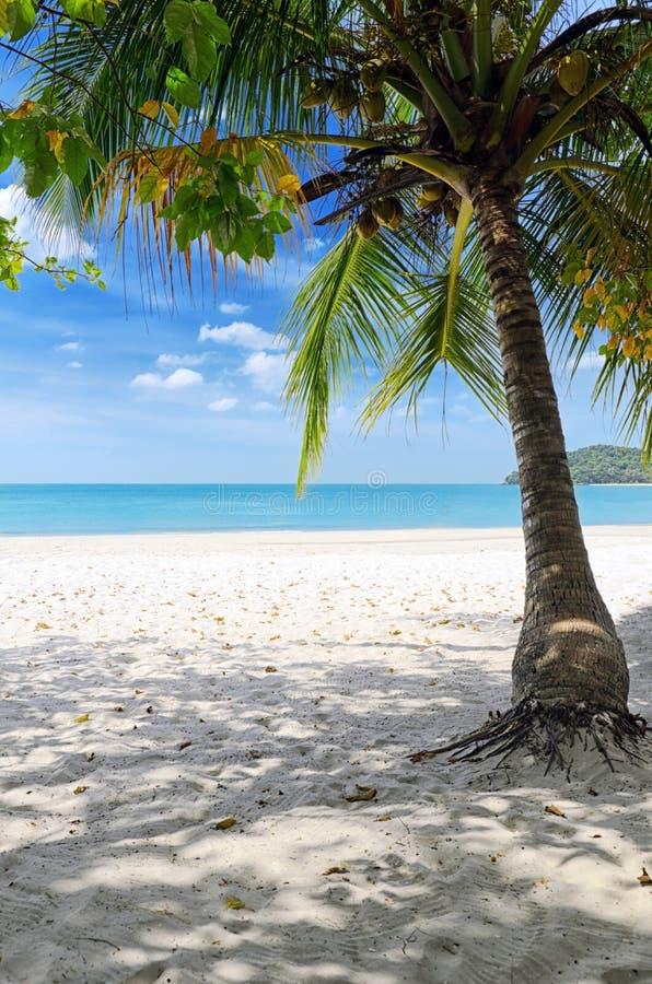 Green Tree On A White Sand Beach Stock Photo