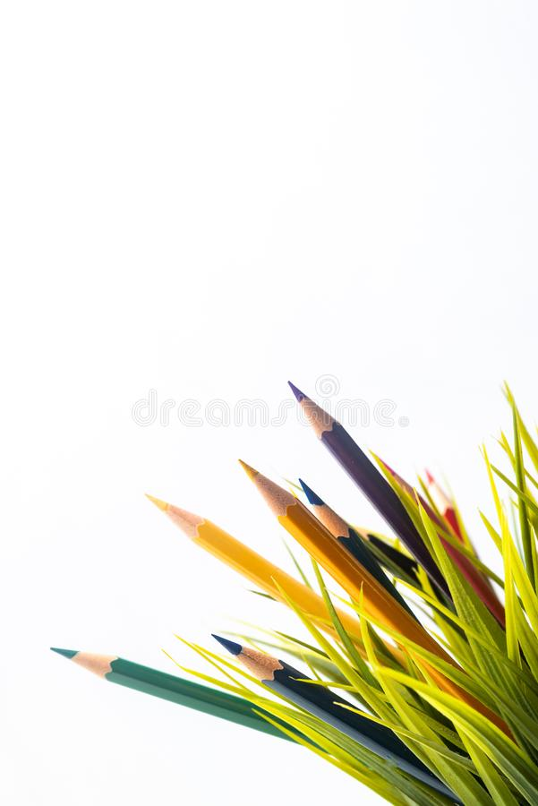 Nature Growth - Still Life Conceptual. Colored Pencils coming out of grass. Shallow depth of field, selective focusing royalty free stock image