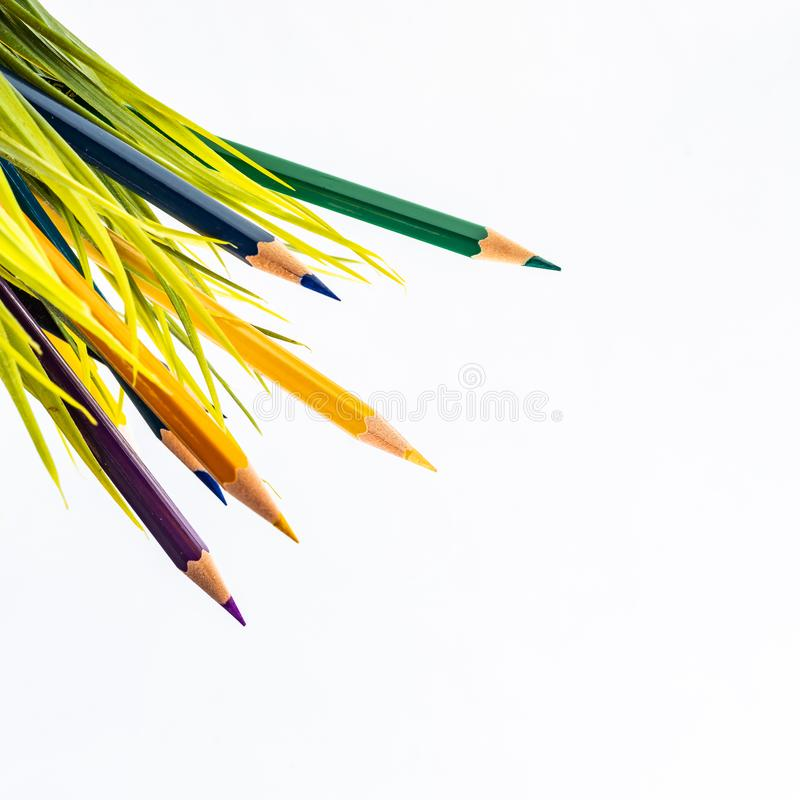 Nature Growth - Still Life Conceptual. Colored Pencils coming out of grass. Shallow depth of field, selective focusing royalty free stock photo
