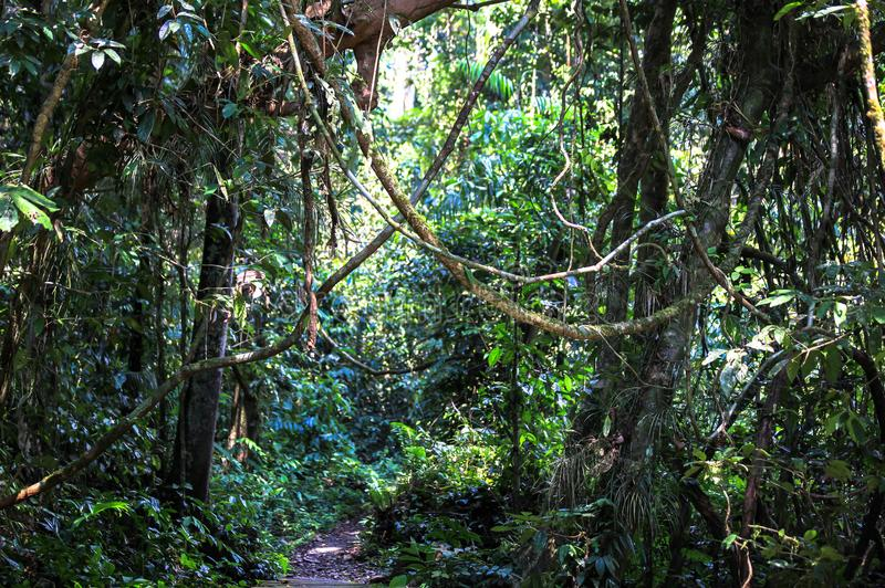 Nature of Gunung Mulu National Park of Sarawak, Malaysia. This picture is taken in Sarawak. The Gunung Mulu National Park is a national park in Miri Division stock photo