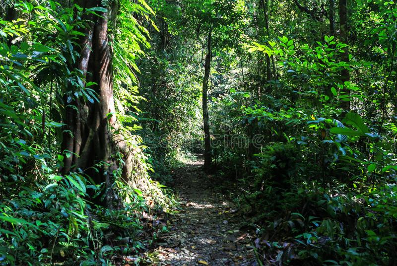 Nature of Gunung Mulu National Park of Sarawak, Malaysia. This picture is taken in Sarawak. The Gunung Mulu National Park is a national park in Miri Division stock photography