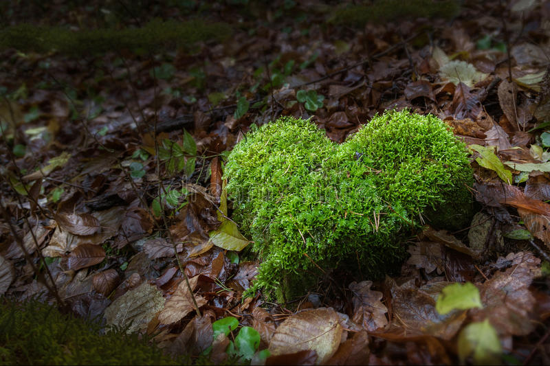 Nature hearth in forest stock photos