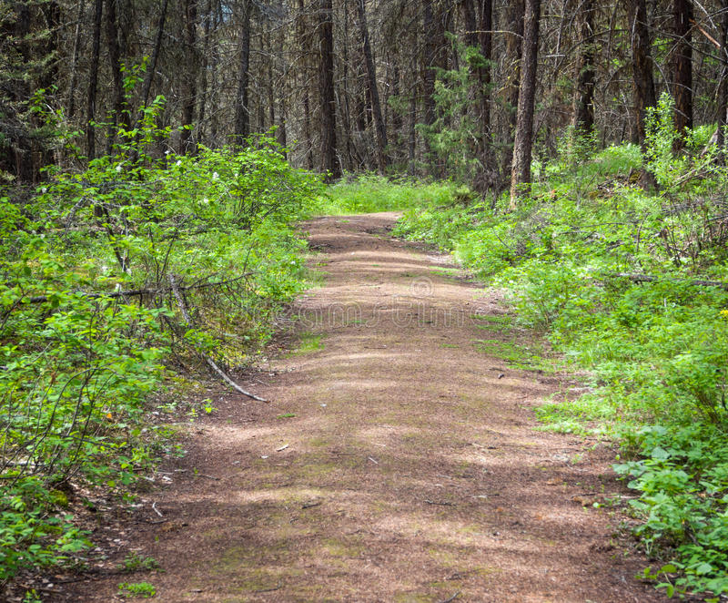 Download Nature hiking trail stock image. Image of path, landscape - 31130705