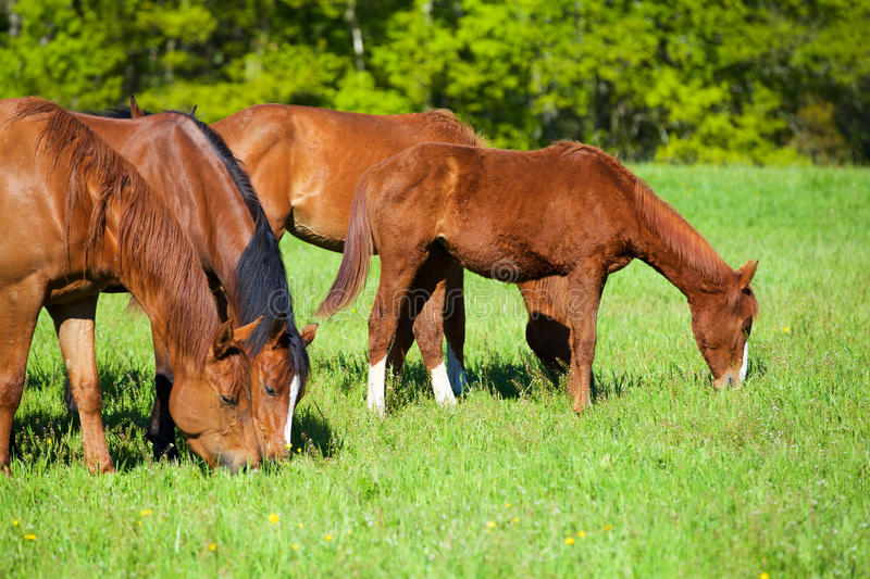 Nature and Horse royalty free stock photo