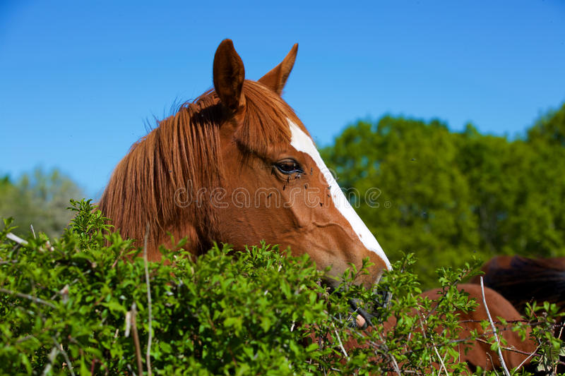 Nature and Horse royalty free stock photography