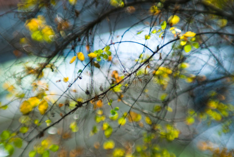 Nature illuminée image stock