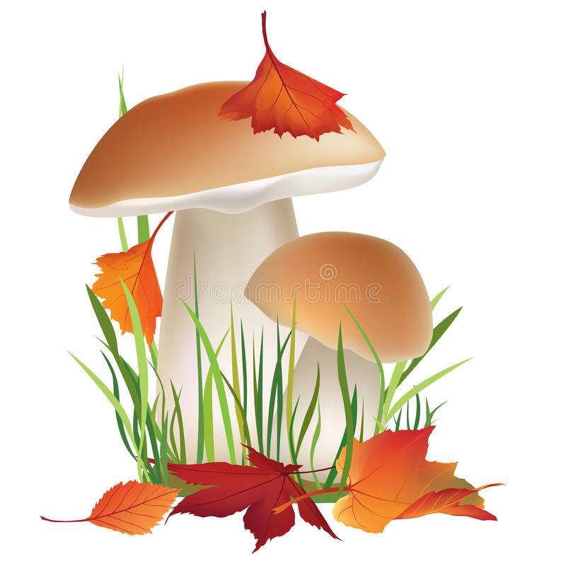Nature illustration. Mushroom in grass with fall leaves isolated on white background. royalty free illustration