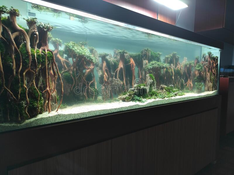 3 260 Aquascape Photos Free Royalty Free Stock Photos From Dreamstime