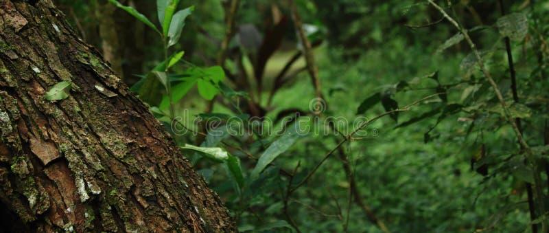 Nature invincible photo libre de droits