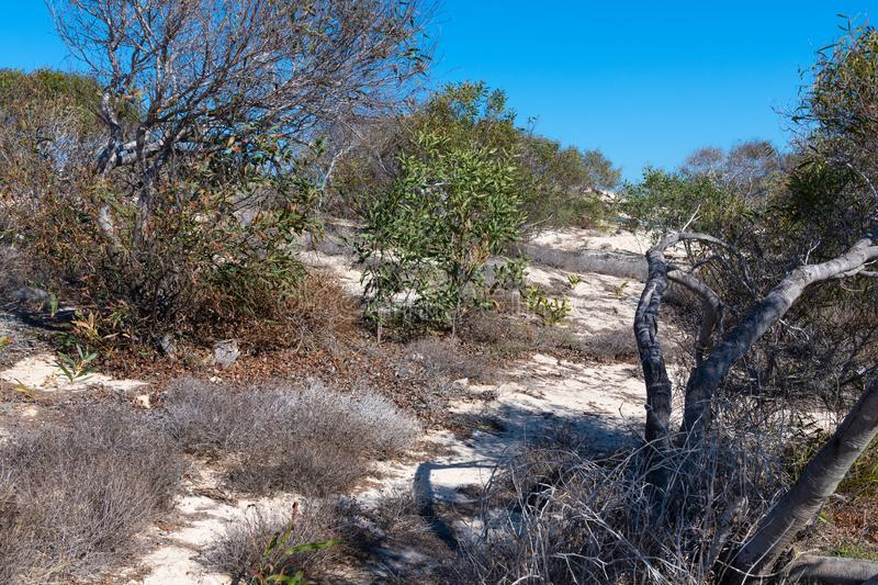 The nature of island of Cyprus - rocky soil and olive trees. The nature of island of Cyprus - a rocky soil and olive trees stock photo