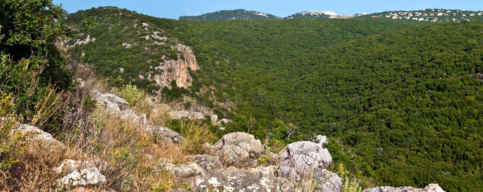 Nature in Israel. royalty free stock photo
