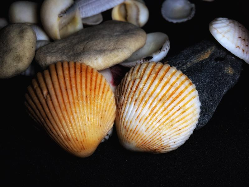 Nature at its best. Group of seashells closeup images on black background stock photos