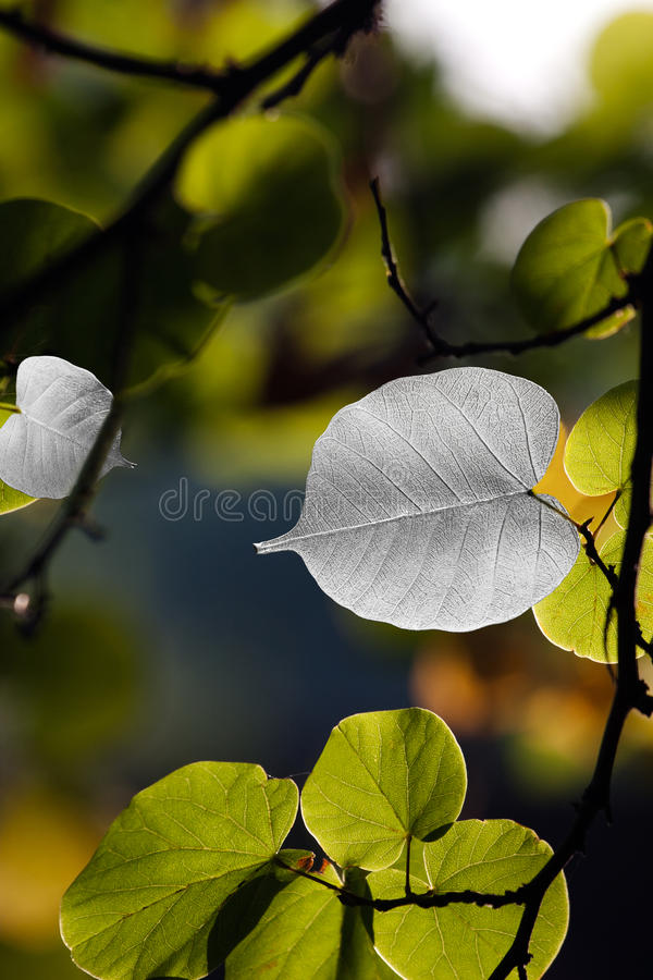Nature jewels stock images