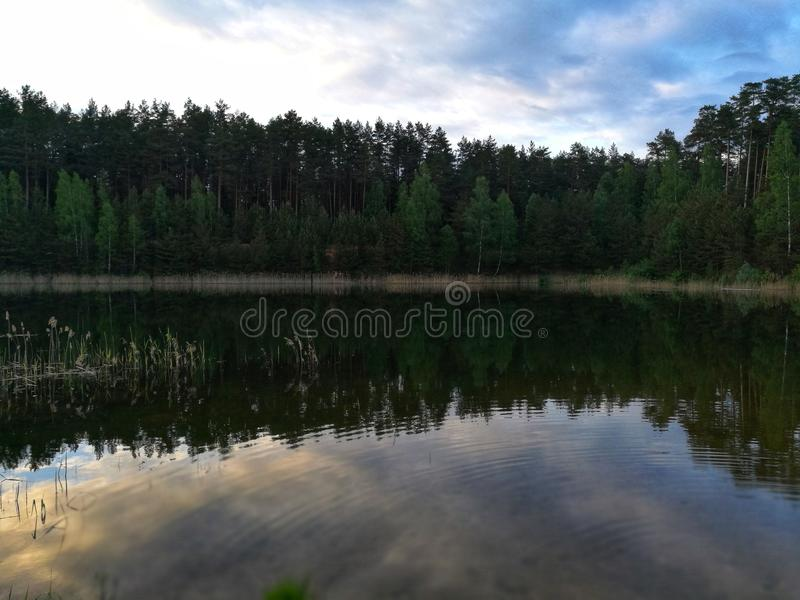 Nature royalty free stock photography