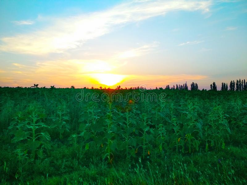 Nature and landscape. Beautiful, summer, love royalty free stock photos