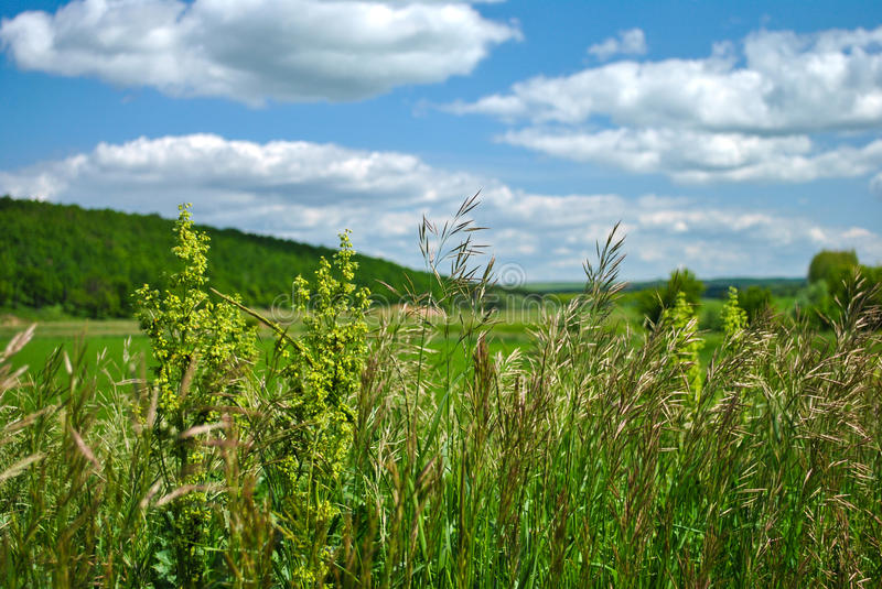 Nature landscape in Russia at summer. Nature landscape in Russia, summer royalty free stock photo