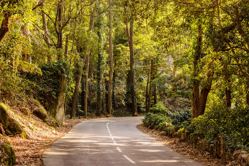 Nature in sintra royalty free stock images