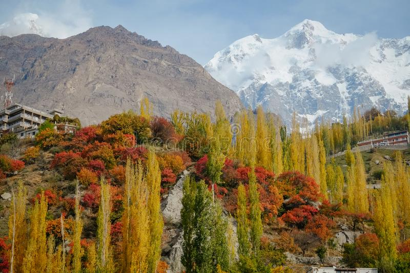Colorful foliage in autumn against snow capped mountain range in Hunza valley royalty free stock image