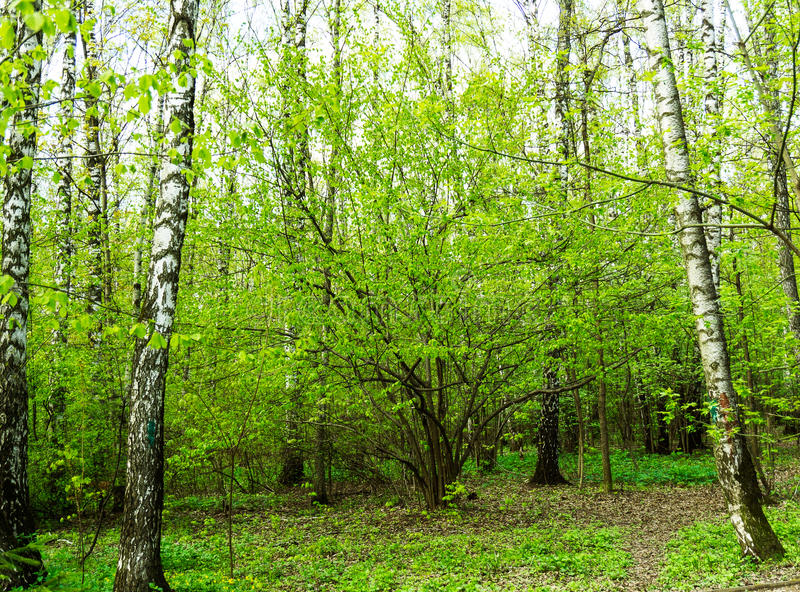 Nature landscape view of a green forest jungle on spring season with green trees and leaves. Peaceful tranquil outdoor scenery royalty free stock photos
